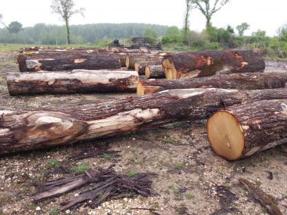 Grume de chêne qualité travers
