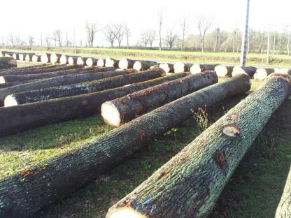 Negoce de grume de chêne qualité tranche
