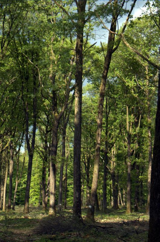 Nos appro en grume de chêne