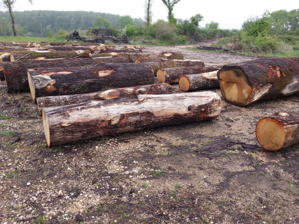 Négoce de grume de chêne qualité traverse