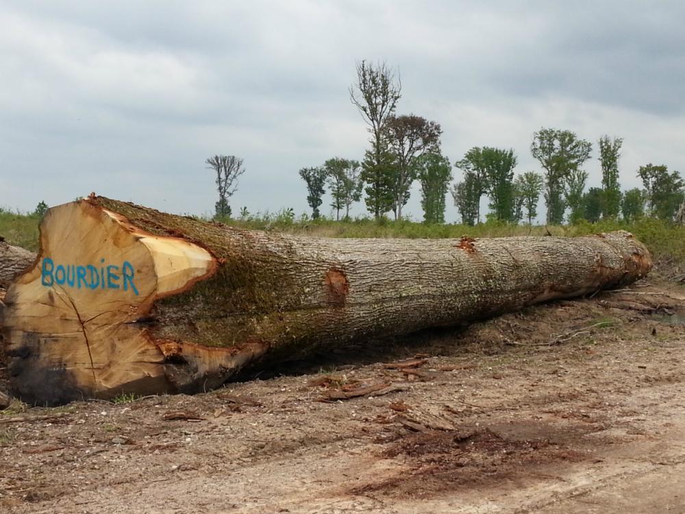 Débardage chêne - Forêt Domaniale de Tronçais